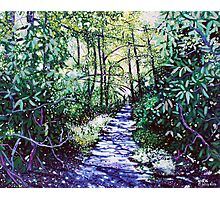 'The Glen Burney Trail' (Blowing Rock, NC) Photographic Print