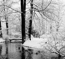 Winter Park by Eriks Dreimanis