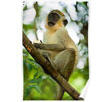 Monkey 2 Poster