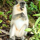 Monkey 3 by Jacinthe Brault