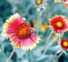 Bumblebee by Eriks Dreimanis