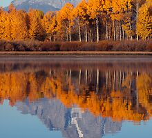 Aspens Aflame at the Oxbow Bend by AMRuttleResale