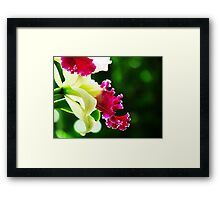Orchid Collection - 3 Framed Print