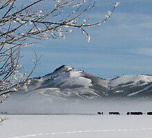 Walton Ranch in Winter by AMRuttleResale