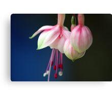 pink hanging fusia macro Canvas Print