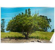 """""""Tree and Dune"""" Poster"""