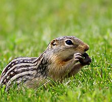 Ground Squirrel Snack by Jennifer Day