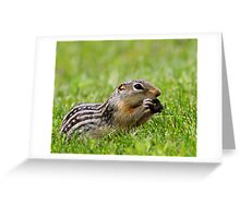 Ground Squirrel Snack Greeting Card