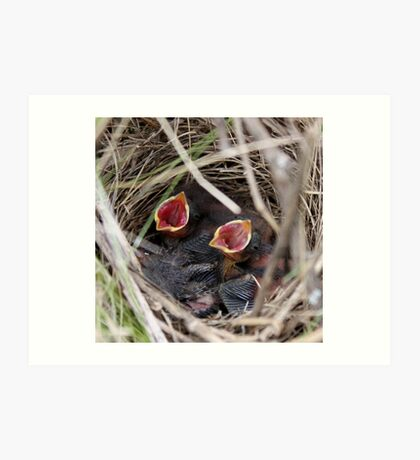 Song Sparrow Nestlings Art Print