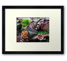 Mixed Fungi Framed Print