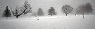 Trees In Snow and Fog - Bridgton Highlands by T.J. Martin