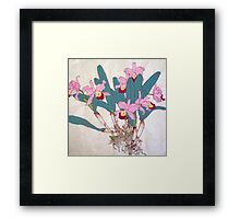 Orchids with roots  Framed Print