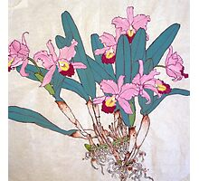 Orchids with roots  Photographic Print