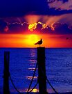 Front Row Seat At Sunset by NatureGreeting Cards ©ccwri