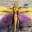Locust by SuddenJim