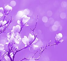Purple Magnolia Love by ©Maria Medeiros