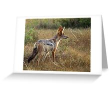 Black Backed Jackal on watch - Kruger National Park Greeting Card