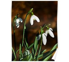 Snowdrops By The Riverside  Poster