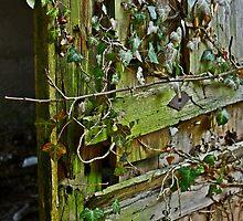 natural door by ♠Mathieu Pelardy♣  ♥Photographe♦