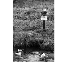 Law Breaking Gulls Photographic Print