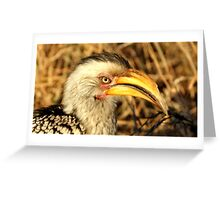 Yellow Billed Hornbill - Portrait Greeting Card
