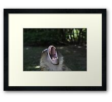Monkey Teeth Photo ~ Barbary Macaques Phone Case Framed Print
