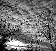Blanketing The Sky by Glenn McCarthy