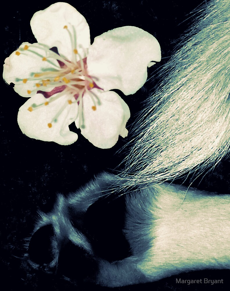 03-07-11:  Allergic Canine by Margaret Bryant