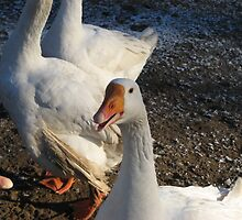 Christmas Goose by Mishkin