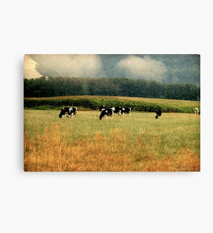 Holsteins in the Country Canvas Print
