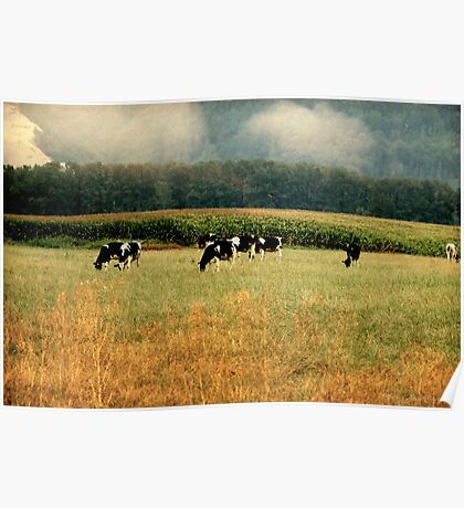 Holsteins in the Country Poster