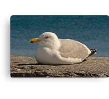 Catching some rays! Canvas Print