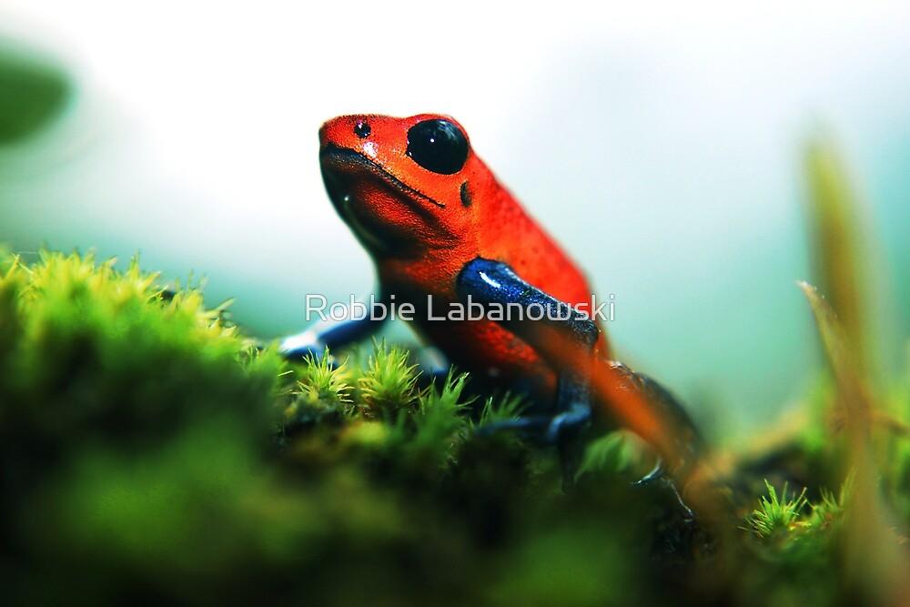 Strawberry Poison-Dart Frog by Robbie Labanowski
