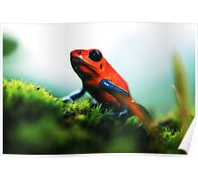 Strawberry Poison-Dart Frog Poster