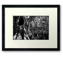 Cypress II Framed Print