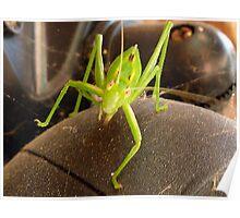 Grasshopper rescue Poster