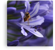 Bee in the Midst Canvas Print