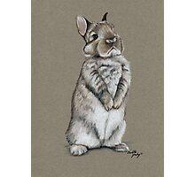 Sitting Bunny Photographic Print