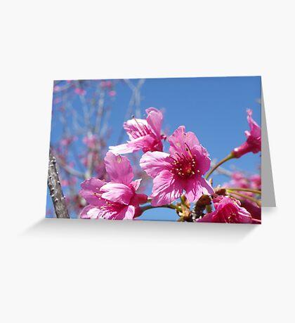 Cherry Flower Greeting Card