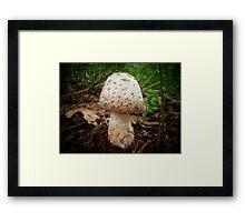 Amanita Framed Print