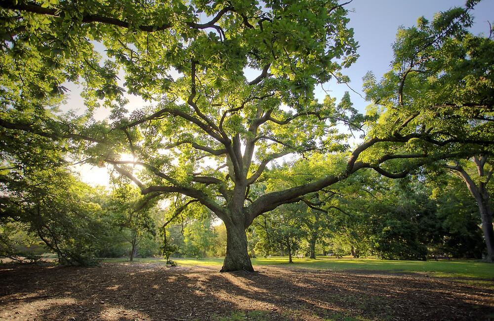 Oak Lawn Royal Botanical Gardens Melbourne by Philip Greenwood