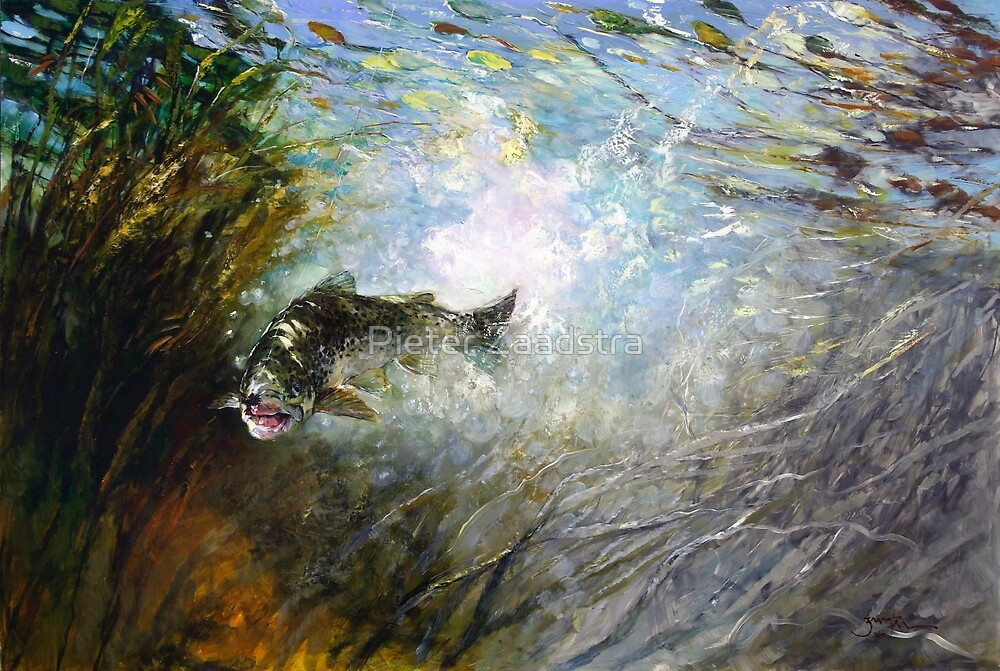 Splash - Fly Fighter - Tasmanian Fly Fishing by Pieter  Zaadstra