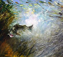 Splash - Fly Fighter - Tasmanian Fly Fishing by Pieter  Zaadstra