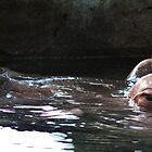 Hippopotamus Eyes by Alyce Taylor
