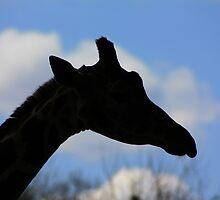 Giraffe Silhouette by Alyce Taylor