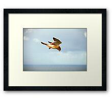 Byron Bay Kestrel Framed Print