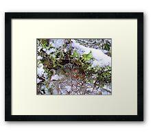 Lichen In The Snow Framed Print