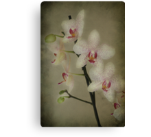 My Orchids Canvas Print
