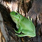 Green Tree Frog In a Tree * Ilfracombe Queensland by Deon Mackay