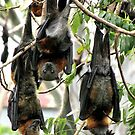 Fruit bats by bobby1